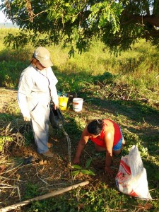 Dona Zilda pnatnado em seu Quintal Agroecológico